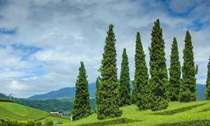 Trees on hills | Compressed air | air equipment